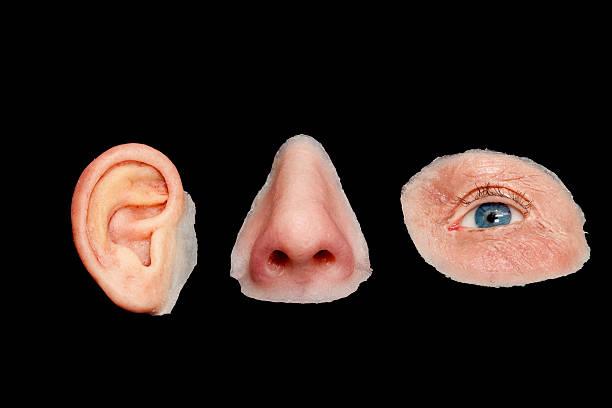 oreja artificial, nariz artificial y ojo con cara facial. Prótesis faciales